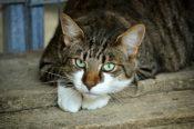 cats-eyes-2671903_640-175x116